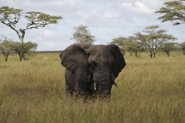 Where Do Elephants Live? Facts about the Habitat of Elephant